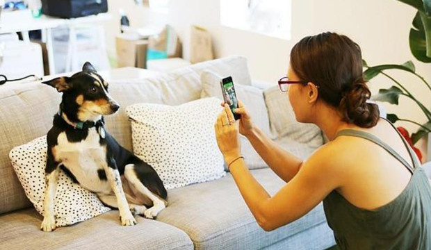 1480003451_BarkCam-social-fotografico-per-cani