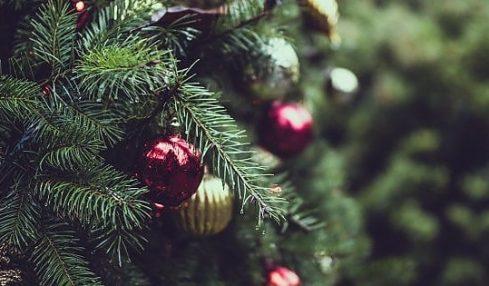 Contrordine, l'albero di Natale vero è meglio di quello di plastica