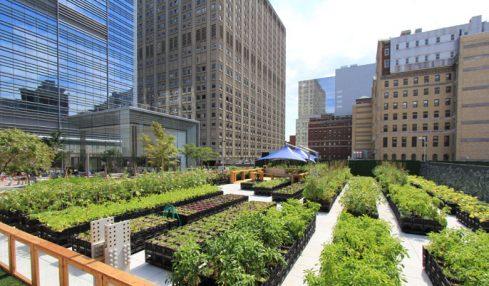 New York, al via la rivoluzione green per i grattacieli