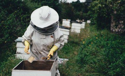 Come adottare un alveare con 3Bee, la start up che salva le api con l'IoT