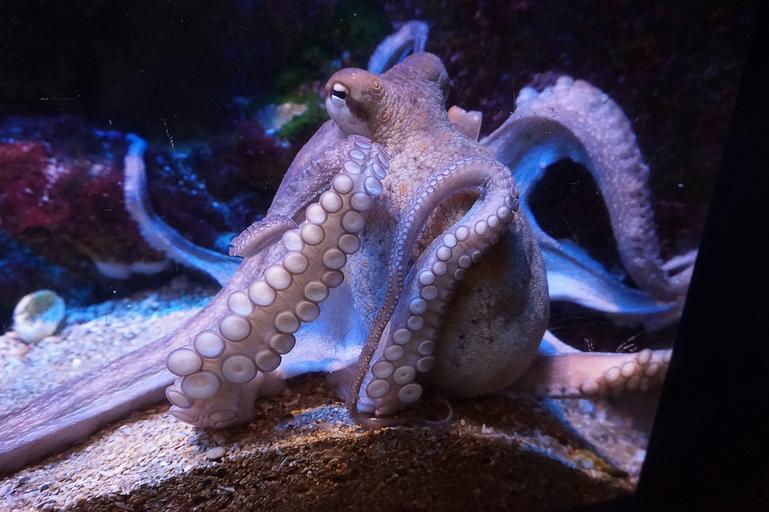 Sistemi neurali complessi: dagli oceani, una lezione per le aziende
