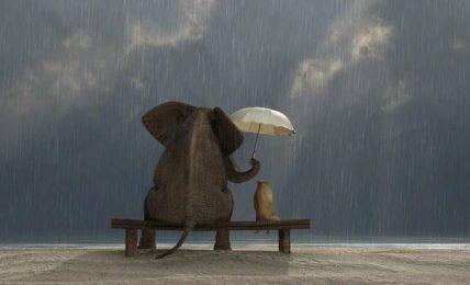 Oltre l'empatia, così il marketing entra nell'era della compassione