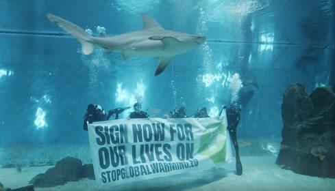 Clima, anche l'acquario di Genova contro il riscaldamento globale